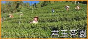 君玉茶園 • 紅烏龍高山比賽茶(君玉製茶廠)