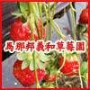 馬那邦義和草莓園