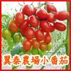 翼泰農場小番茄